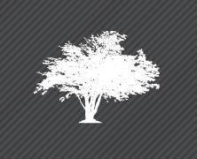 nouvelles_arbustes