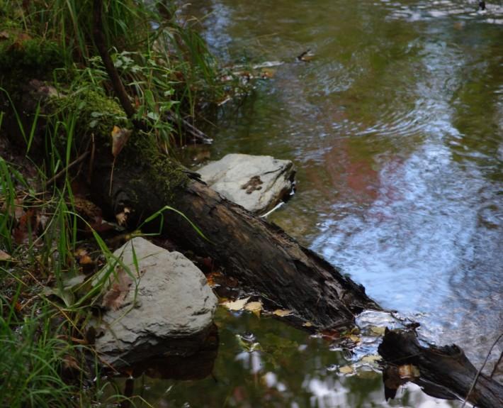 Abris aménagés sur la rivière Cugnet à Saint-Lambert-de-Lauzon (COBARIC, 2014)