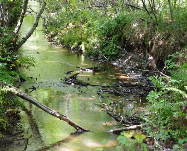 Nettoyage léger de la rivière Cugnet à Saint-Lambert-de-Lauzon (COBARIC, 2014)